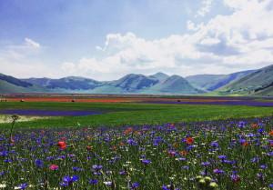 Fioritura di Castelluccio di Norcia: quando, come e perché?