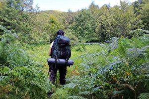 Trekking nelle Foreste Casentinesi: Badia Prataglia-Camaldoli
