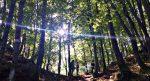 Weekend tra i boschi in Romagna: come e dove dormire a Fiumicello