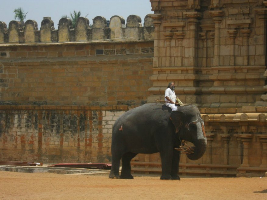 Uomo su elefante - Tamil Nadu