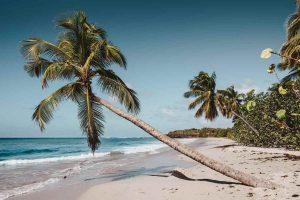Martinica spiaggia con palma