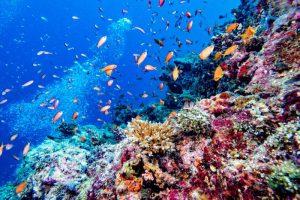 Fondo mare Maldive