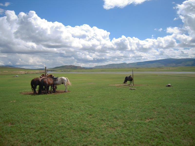 mongolia trekking cavallo1