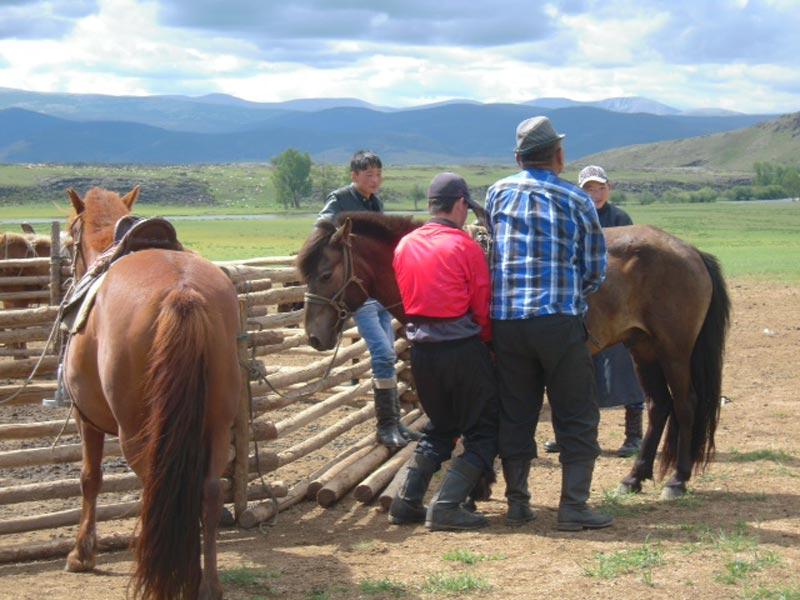 mongolia trekking fringeintravel