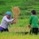 Sapa: impressioni e consigli su una delle tappe imperdibili del Vietnam