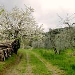 Itinerario trekking 2 giorni in Toscana: da Certaldo a San Gimignano