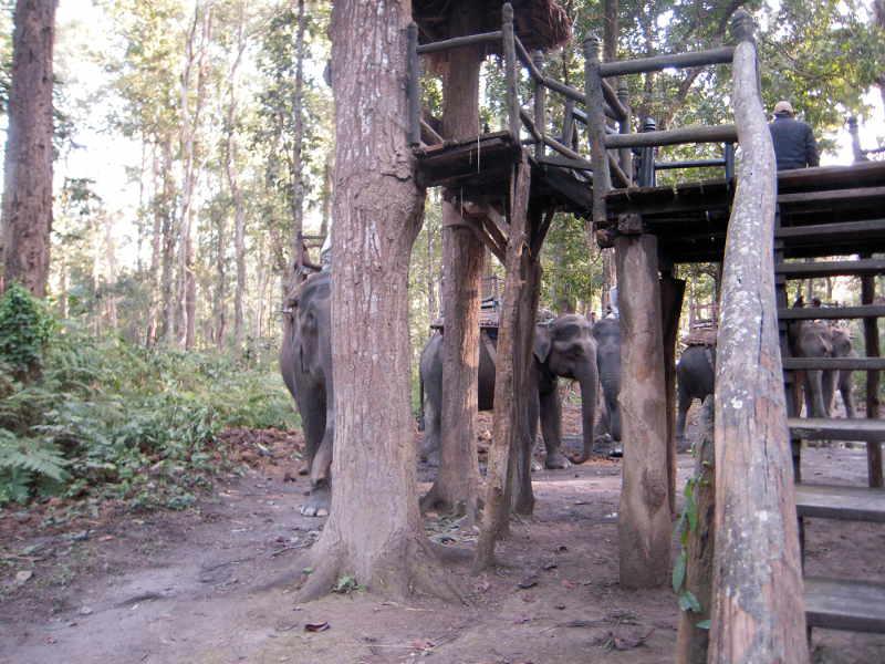 chitwan elefanti