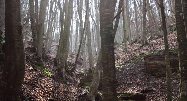 trekking in romagna