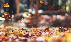 Trekking e cammini d'autunno: 10 escursioni ideali in questa stagione
