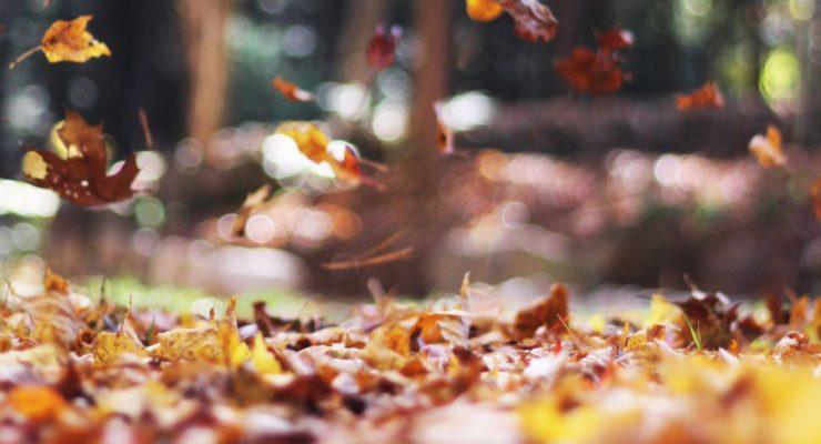 Trekking e cammini d'autunno