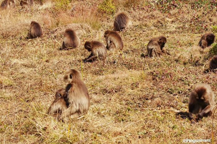 Trekking in etiopia3