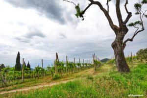 A piedi nei Colli Euganei: l'avvincente sentiero Atestino