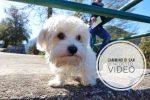 cammino di san benedetto VIDEO 2