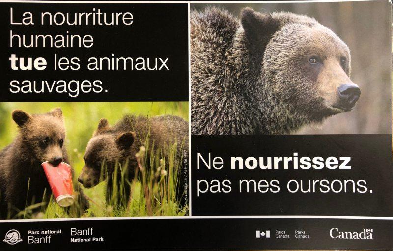 orsi in canada non dare cibo