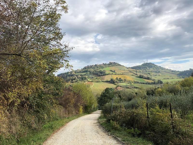 Bertinoro colline a piedi gita10