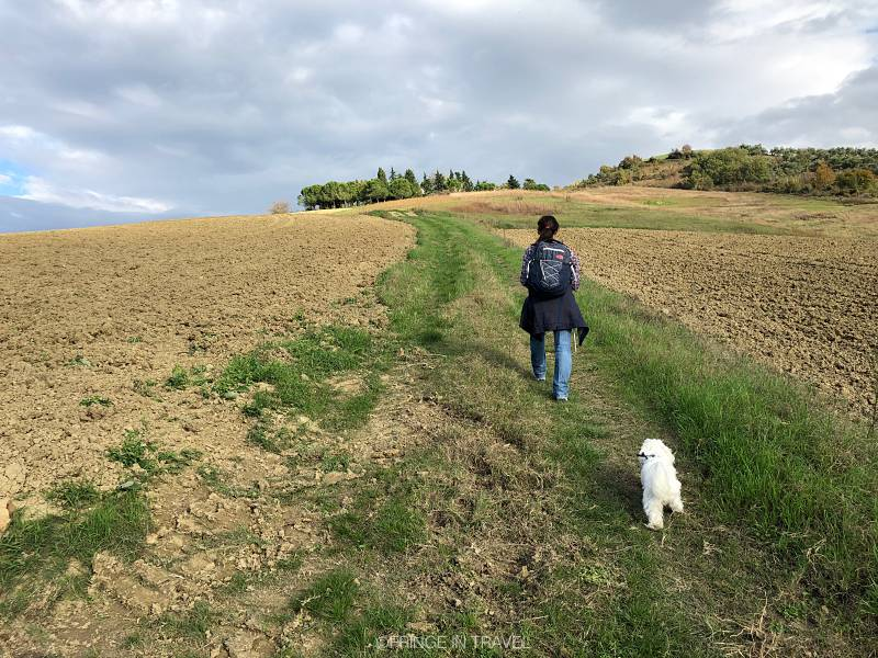 Bertinoro colline a piedi gita