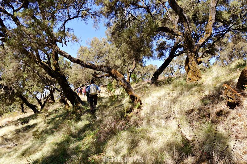 Escursionismo in Etiopia4