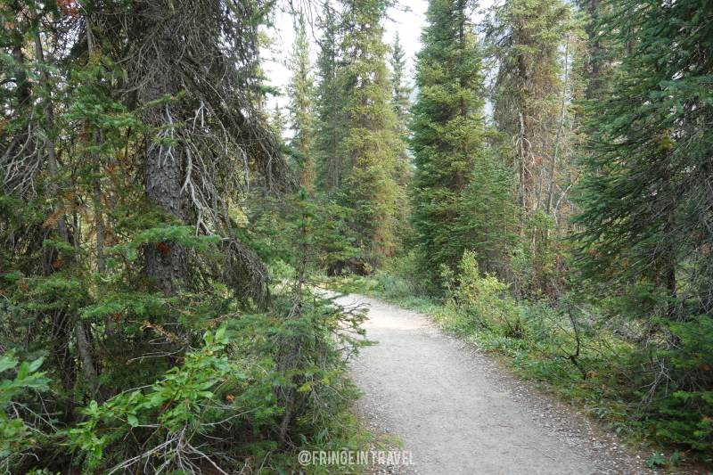 Iceline Trail Top Trekking in Canada1