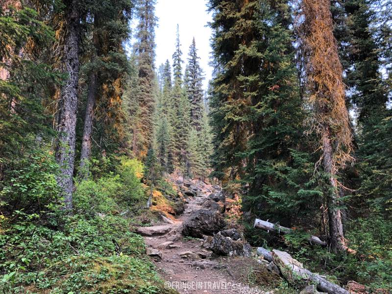 Iceline Trail Top Trekking in Canada15