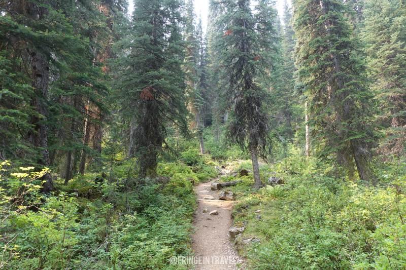Iceline Trail Top Trekking in Canada5