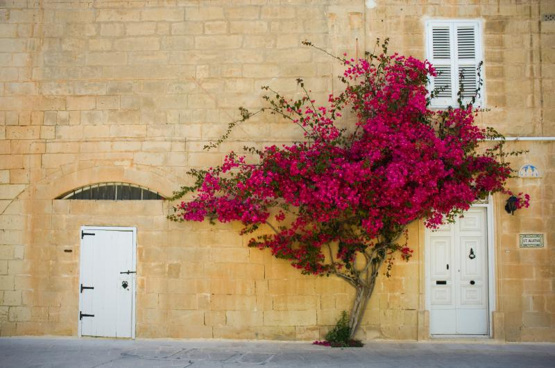 Mdina - Trekking a Malta