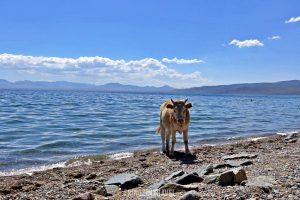 Lago Song Kol Kirghizistan