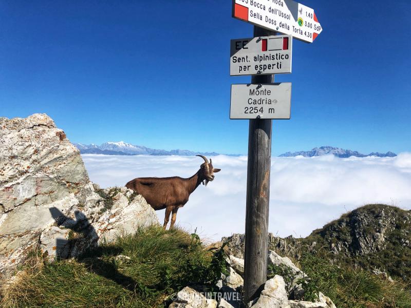 Monte Cadria cima