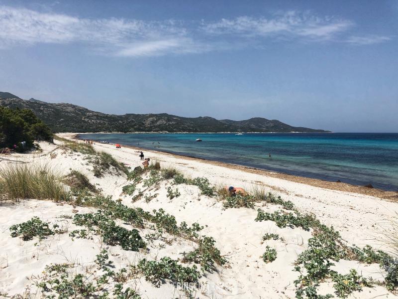 spiaggia di Saleccia18 la sabbia