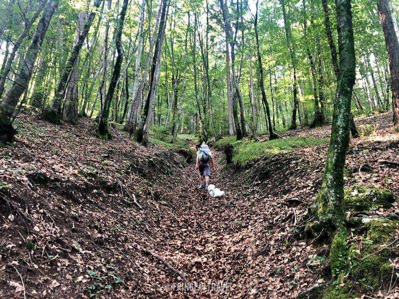 Bosco Valle di Ledro