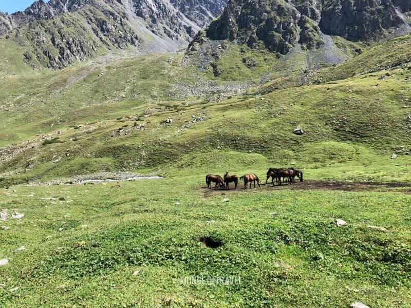 Kirghizistan - Cavalli in un paesaggio