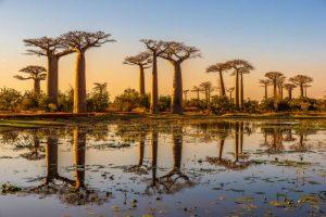 viale dei Baobab Madagascar