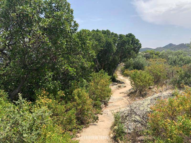 sentiero saleccia lotu corsica8