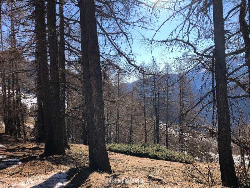 parco-Naturale-Orsiera-Rocciavre-bosco