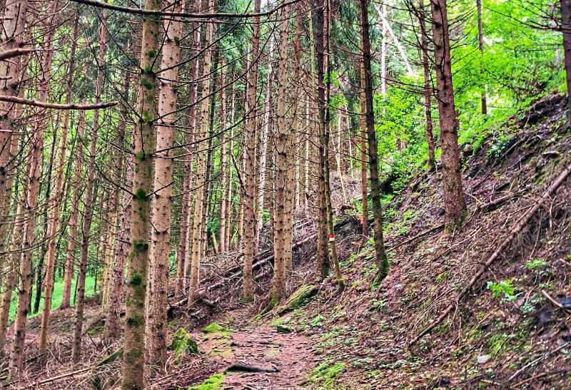 Monte Ritoio Foreste Casentinesi