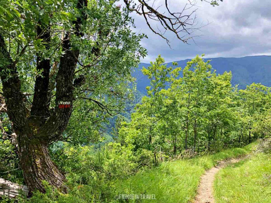 Diga Ridracoli percorso escursione2