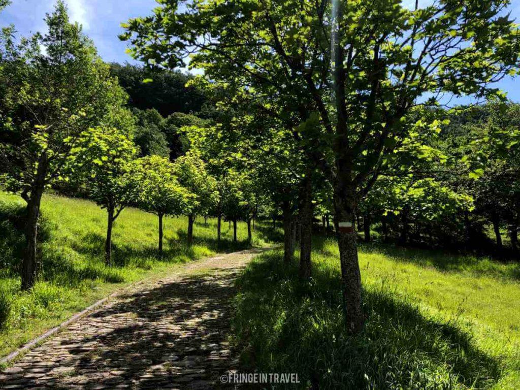 Sentiero natura diga ridracoli a caselle