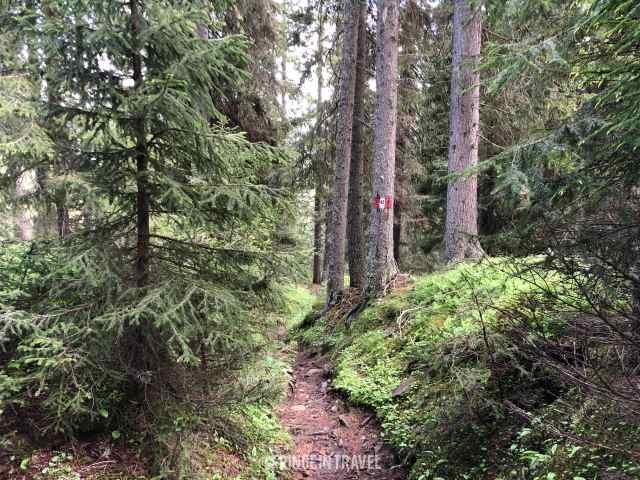 bosco hans e paula steger percorso