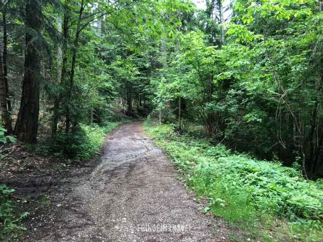 strada bosco sciliar 93
