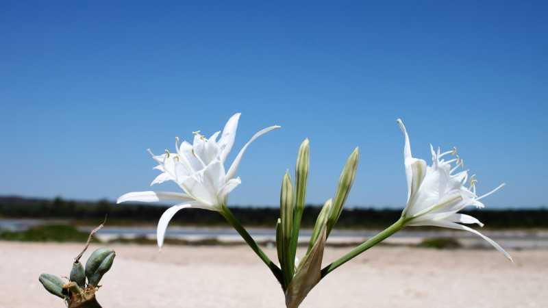 fiore mare