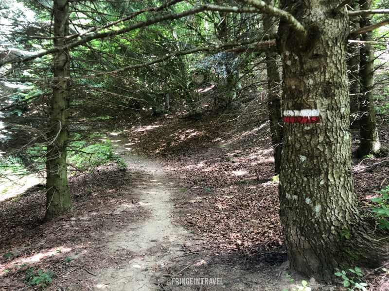 boscco monte comero pontini