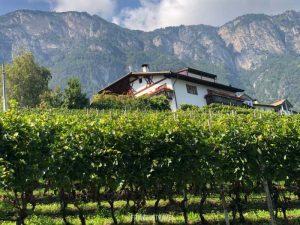 Strada del vino Alto Adige5