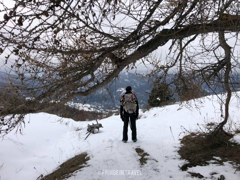 Gran Bosco Salbeltrand Piemonte Ciaspolata5