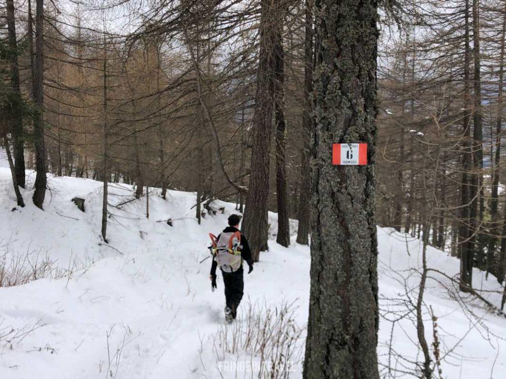 Ciaspolata in Piemonte: avete mai sentito parlare del Parco Gran Bosco di Salbertrand?Vi racconto l'escursione invernale a Montagne Seu.
